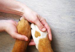 Psi s važnim zadatkom