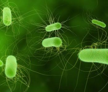 E. coli je najčešća uzročnica upala mokraćnog sustava