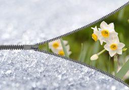 Proljece zimi