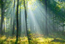 šuma, zdravlje