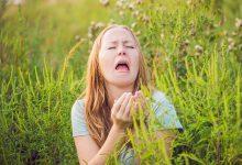 alergija, ambrozija