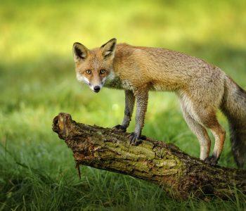 bjesnoća je bolest kojoj su podložne sve toplokrvne životinje i čovjek