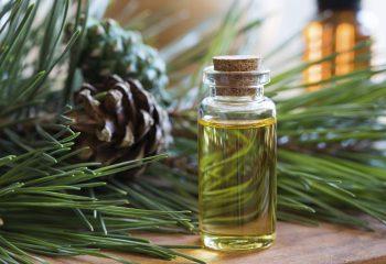 Eterična ulja crnogorice imaju mirisna ljekovita svojstva