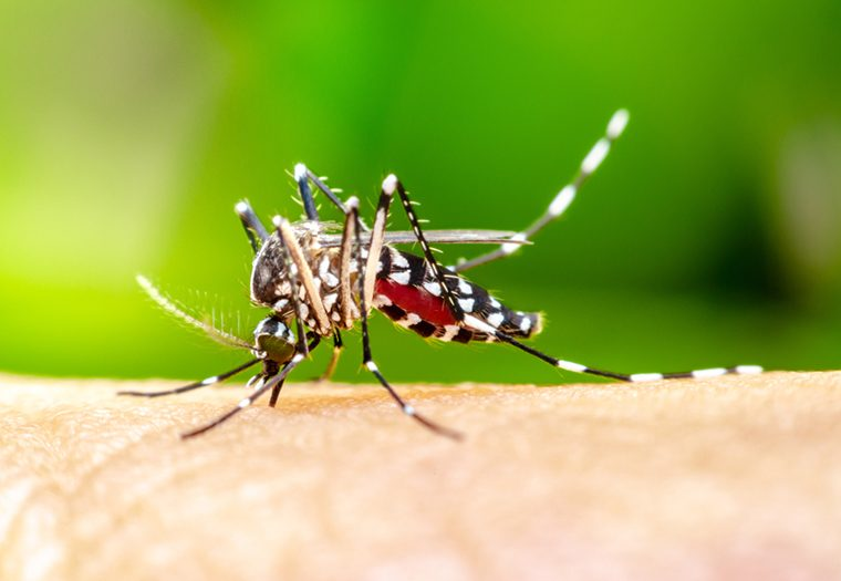 komarac, virus zapadnog nila