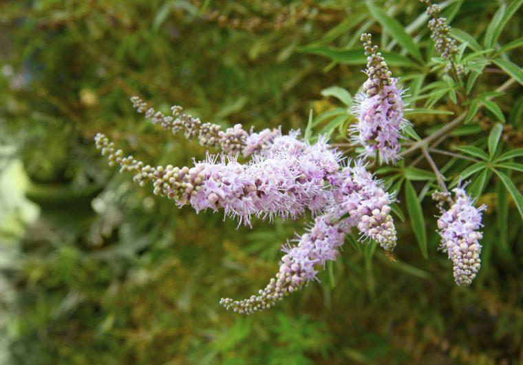 Konopljikom se tjeraju simptomi menopauze i PMS-a
