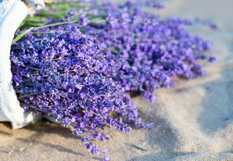 ljekovito bilje protiv nesanice i stresa