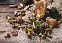 Neke vrste gljiva imaju iznimna ljekovita svojstva