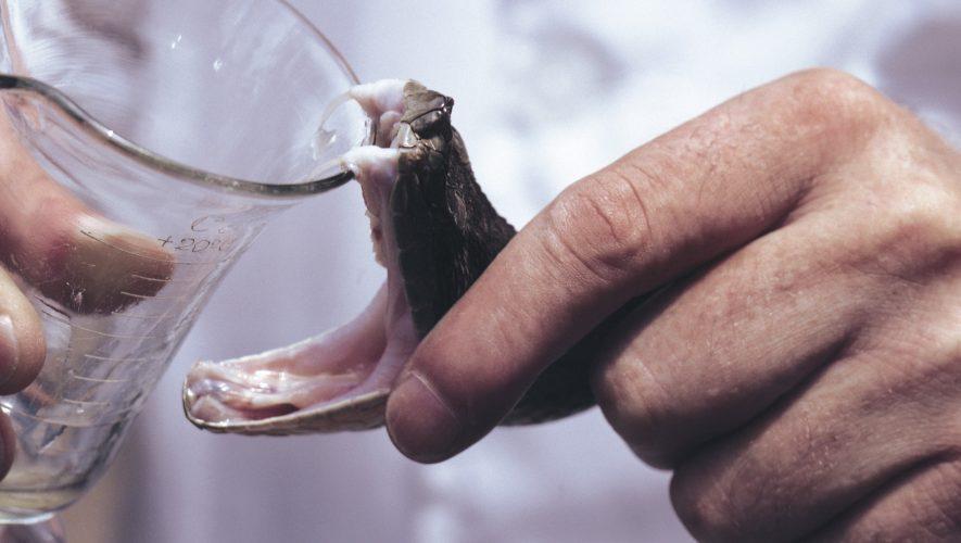 Otrovi nekih životinja su izvor lijekova