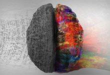 Ljudski mozak - savršenstvo prirode