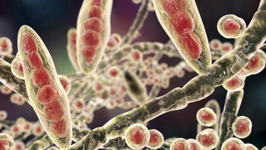 zoonoses, Gljivične bolesti zajedničke ljudima i životinjama