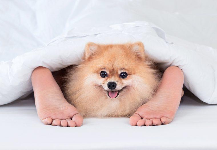 spavanje s kućnim ljubimcem