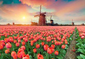 Nizozemski Keukenhof jedan je od najvećih i najljepših cvjetnih parkova na svijetu