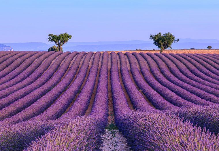 Najljepša cvjetna polja koja morate posjetiti u proljeće