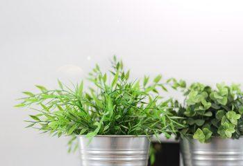 ljekovito bilje, začinsko bilje, balkon, začini