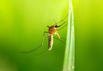 ubodi insekata, svrbež, ubodi, alergijske reakcije