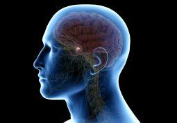Bolesti hipofize Što su, kako ih prepoznati i liječiti