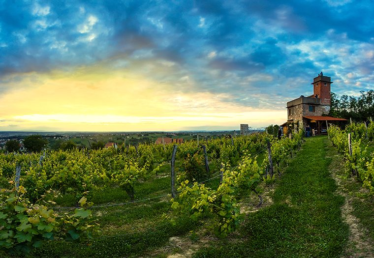 izletnička destinacija, bjelovarsko-bilogorski kraj, zelena oaza