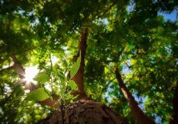 Nim - drvo 21. stoljeća