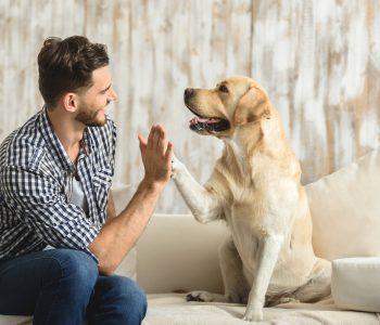 Povezanost pasa i ljudi
