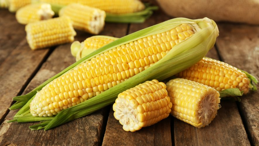 ljeto u znaku kukuruza