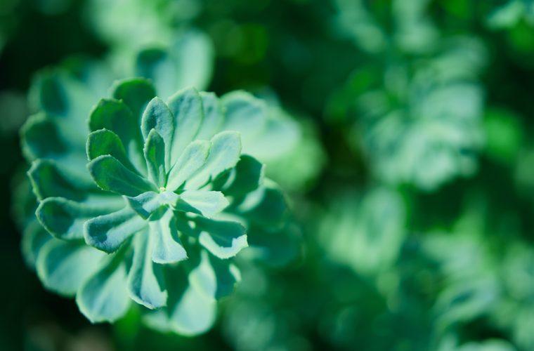 biljke i namirnice koje će prevenirati jesenski umor
