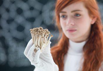 Psihodelici psihoaktivne gljive