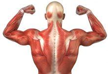 UZV pregled muskuloskeletnog sustava