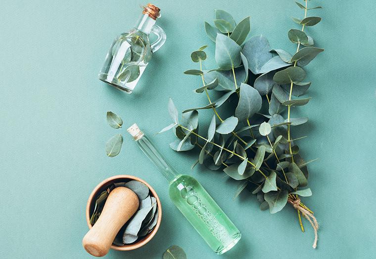 Ljekovite biljke kasalj disni putevi