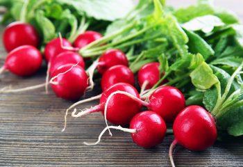 rotkvice zdravlje vitamini zdrava prehrana rotkvica