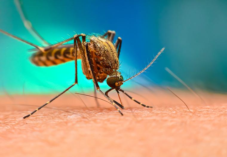 komarci krpelji zaraza koronavirusom rizik od zaraznih bolesti