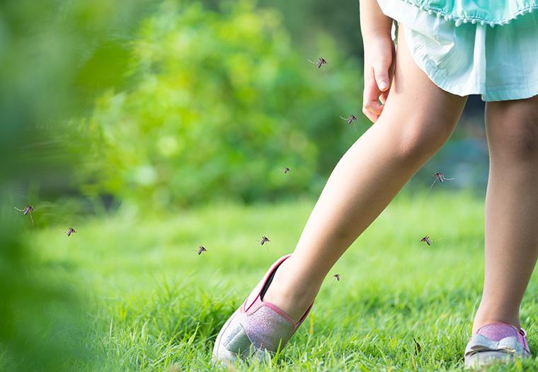 ljeto suncanica ubodi insekata dehidracija opekline od sunca trovanje hranom