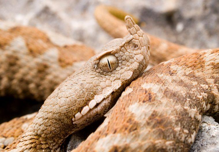 otrovne zivotinje ugrizi ubodi skorpion zmija strsljen otrovna riba