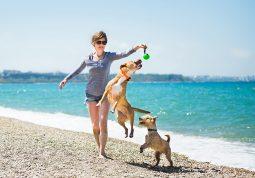 ljetovanje sa psom