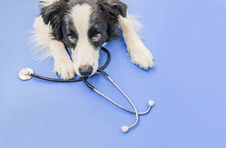 psi otkrivaju COVID-19