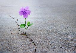 razorni potres kako dalje savjeti psihologija pomoc stres trauma