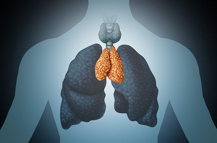 prsna zlijezda timus imunitet infekcije žlijezde stitnjaca T-limfociti