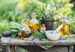 samoniklo jestivo ljekovito bilje medvjedi luk kopriva borazina