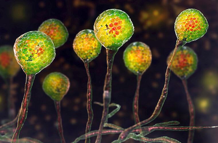 mukormikoza COVID-19 kandidiijaza crna gljivica