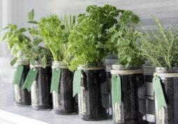 zacinsko bilje uzgoj balkon začini bosiljak vlasac origano