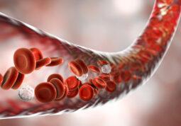 krv krvna zrnca krvna slika