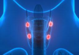 paratireoidne zlijezde hiperparatireoidizam kalcij vitamin D