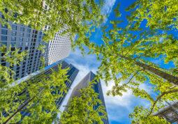 stabla ljekovita svojstva drvece sume zelenilo zdravlje ekologija priroda