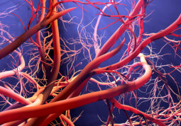 srce krvne žile mikrovaskularna bolest srčani udar