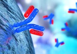 Monoklonska antitijela protutijela
