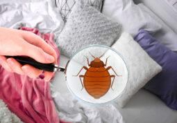 stjenice-insekti-zdravlje