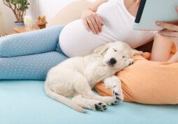 kucni ljubimci trudnoca infekcije bolesti